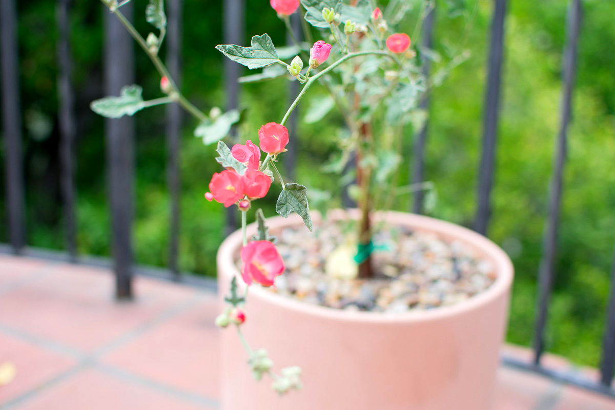 Potted Natives-17.jpg