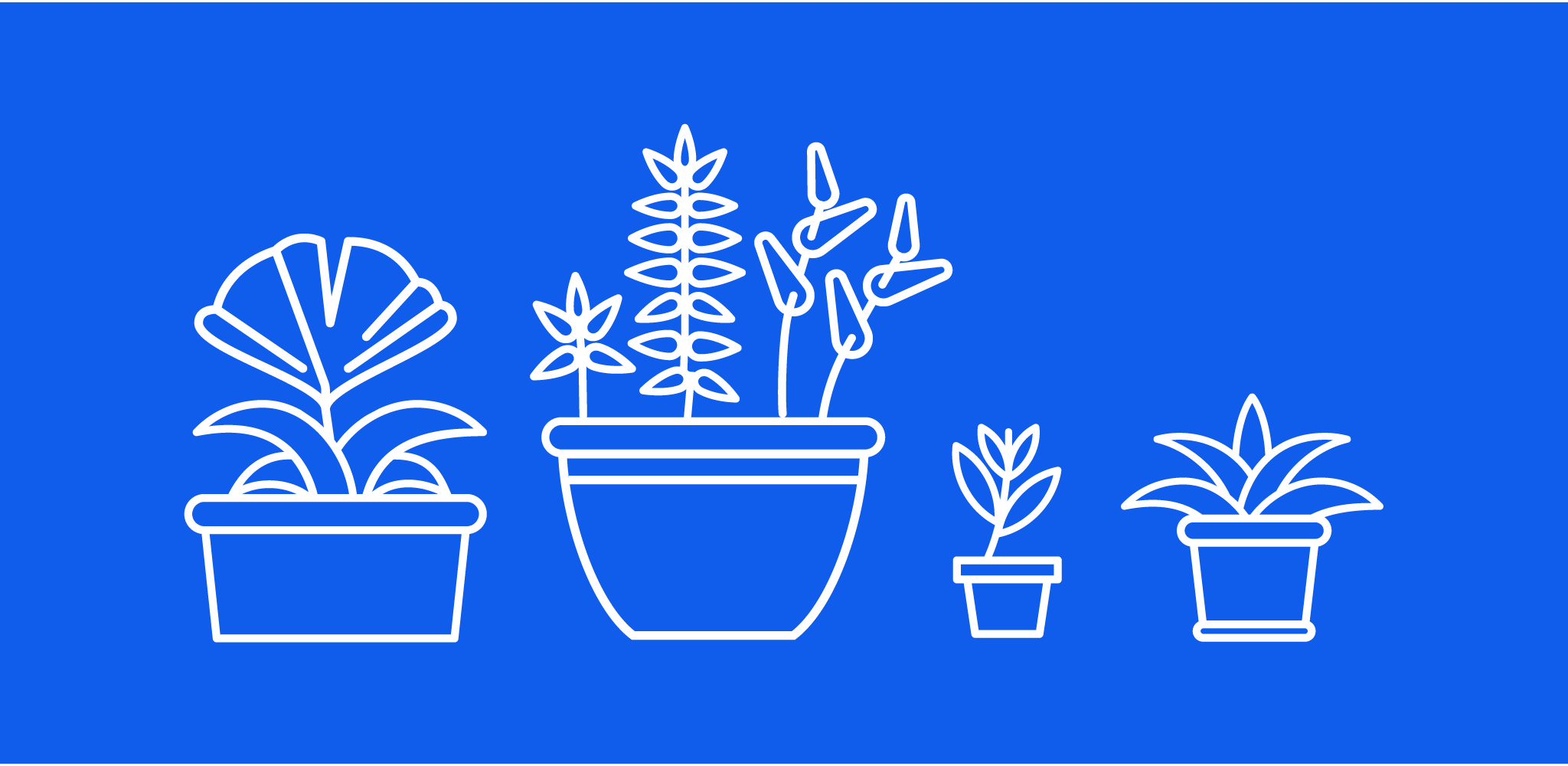Native Potscapes - Beautiful California Natives, expertly curated, delivered and potted for your home.— ⧫ —