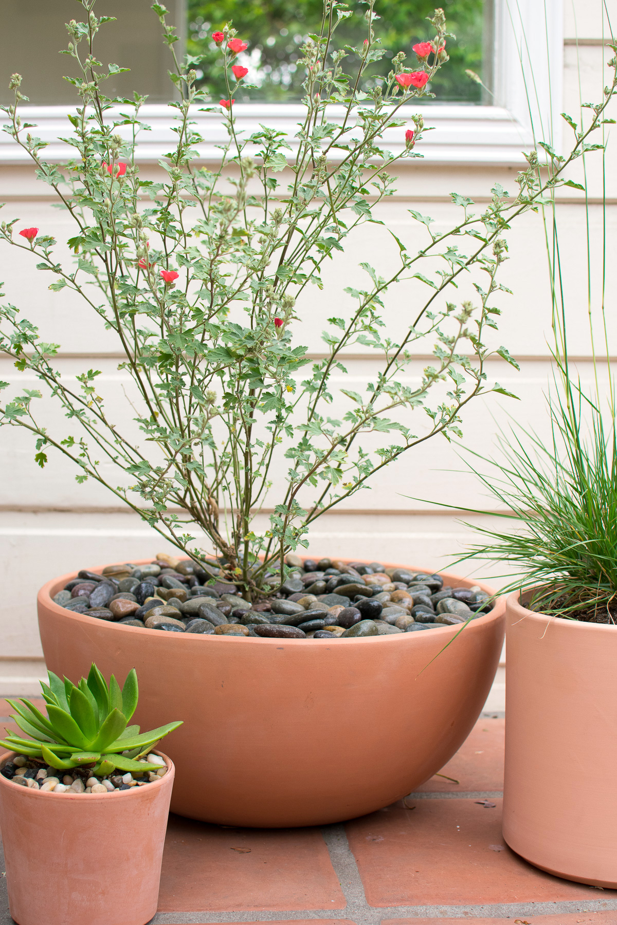 Potted Natives-29.jpg