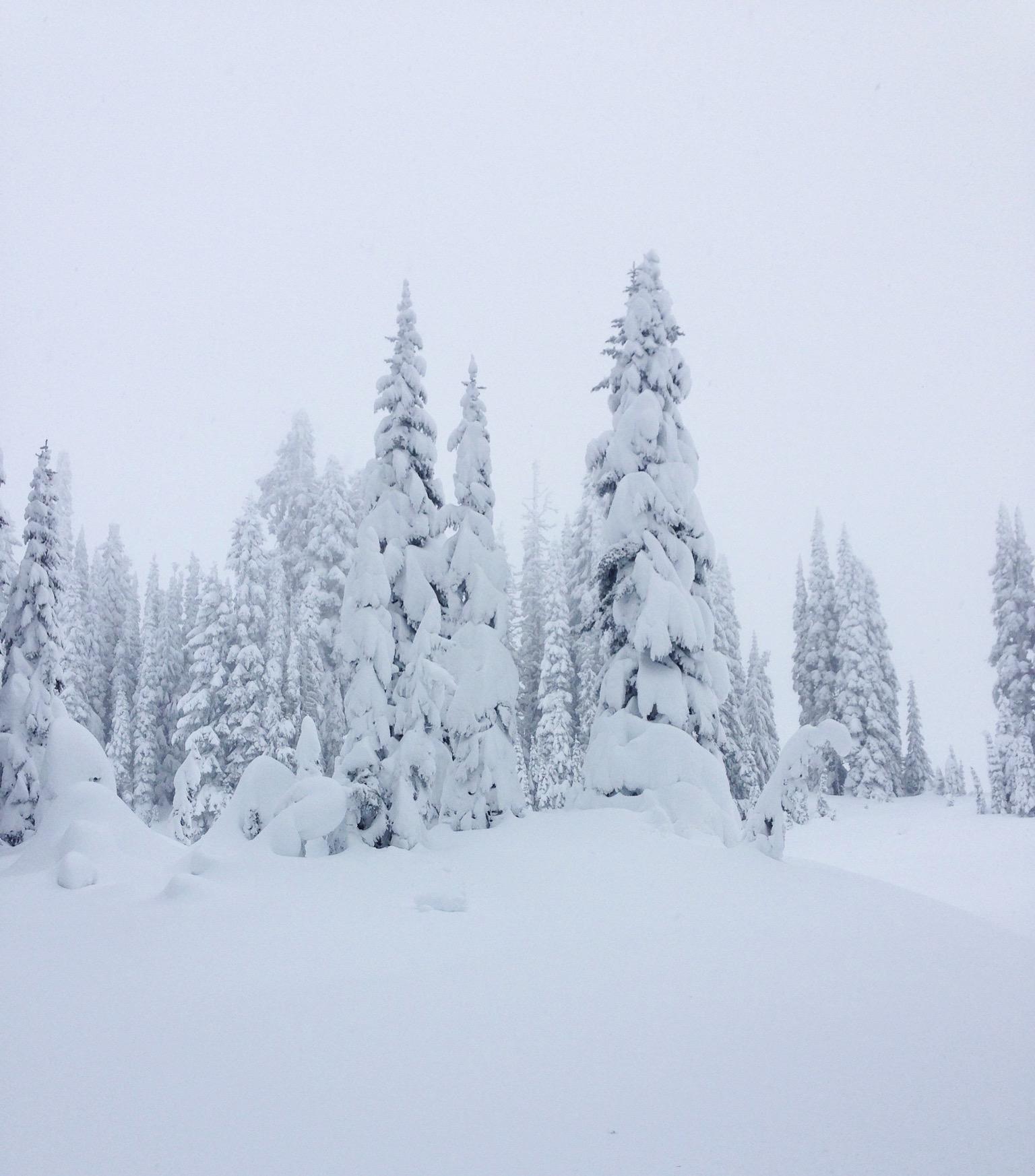white snow.jpg
