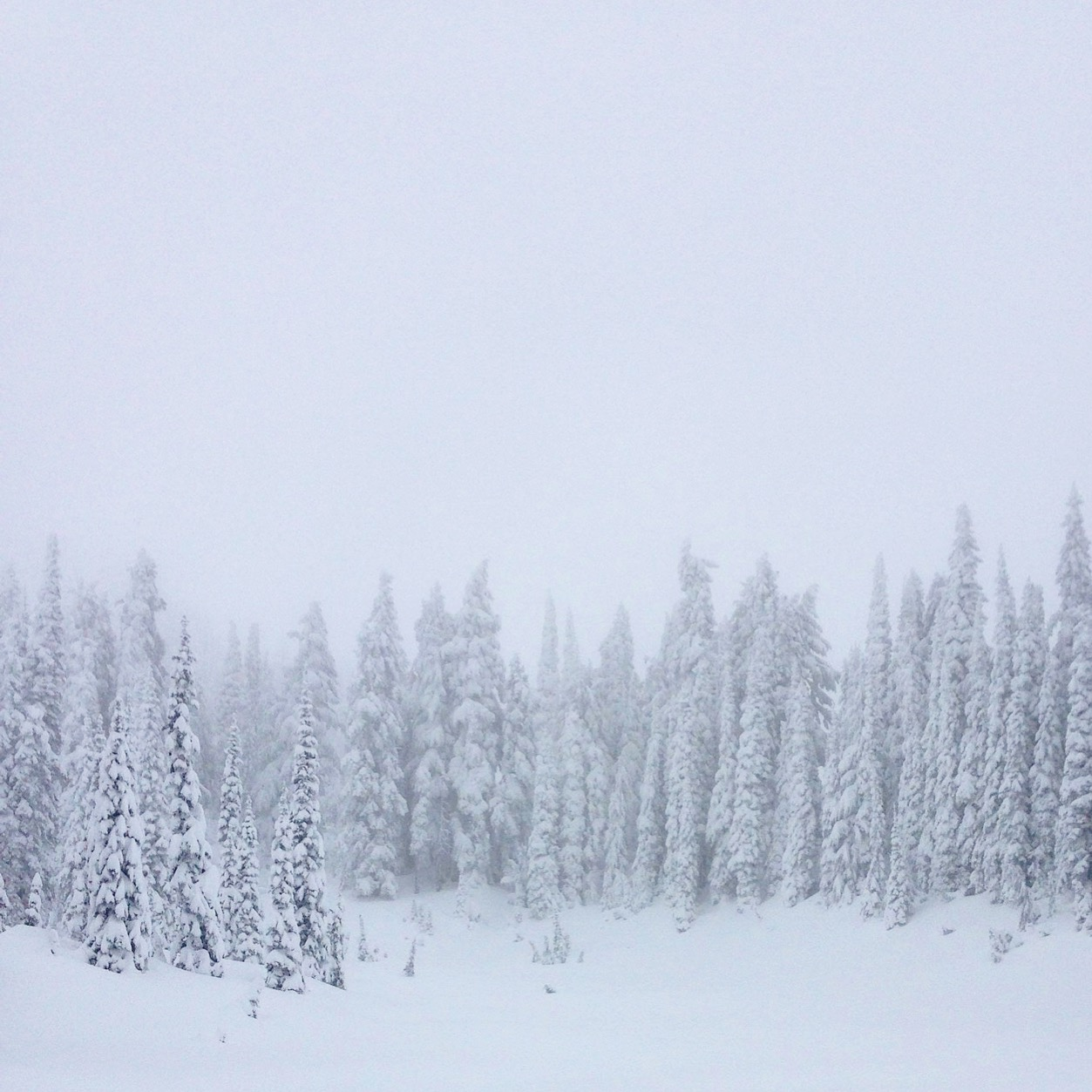 Snow pics.jpg