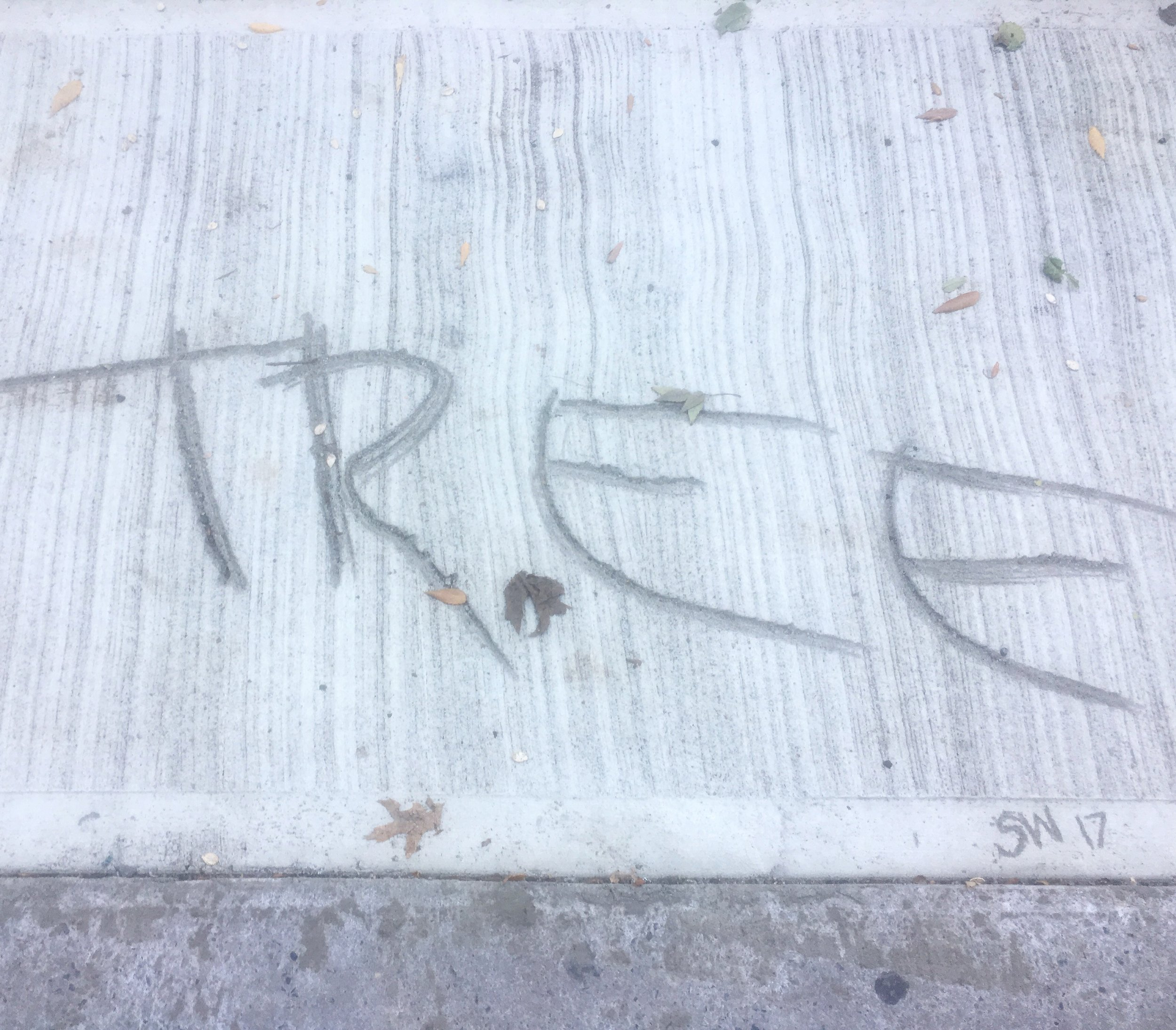 concrete tree.jpg