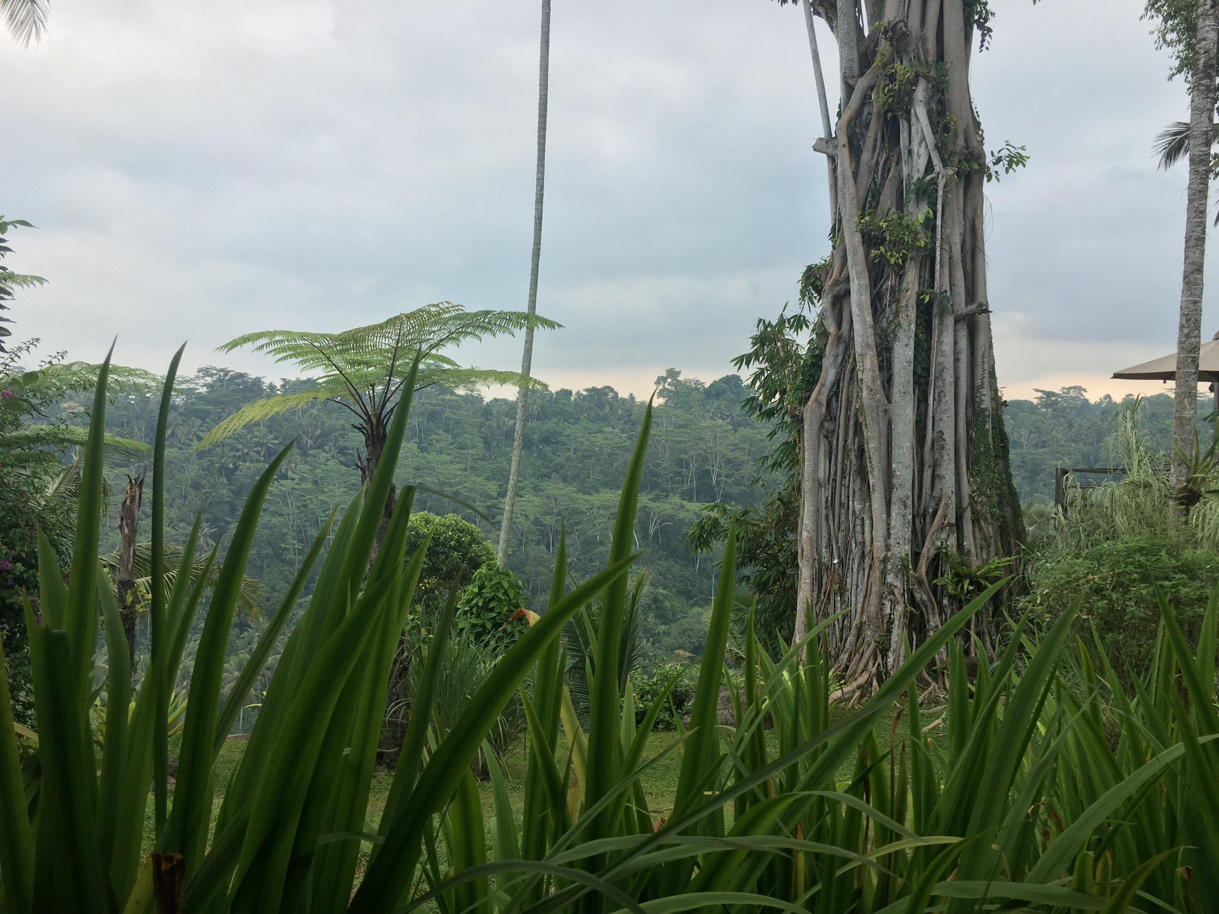 Bali grass.jpg