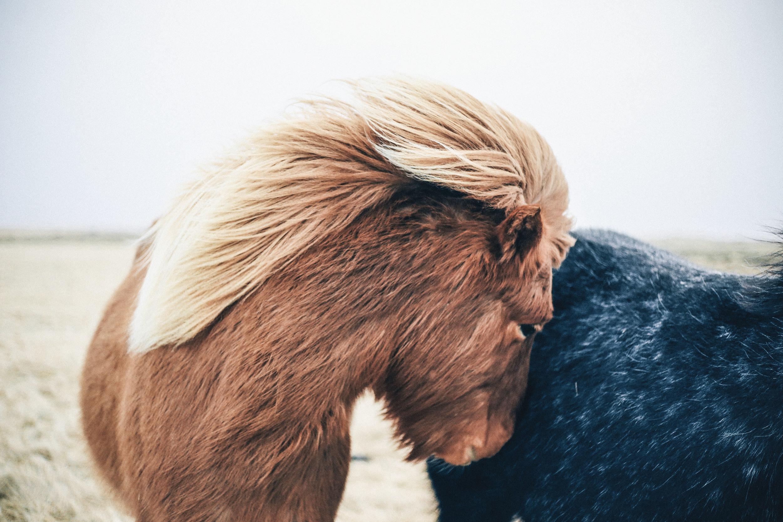 Even ponies get shy