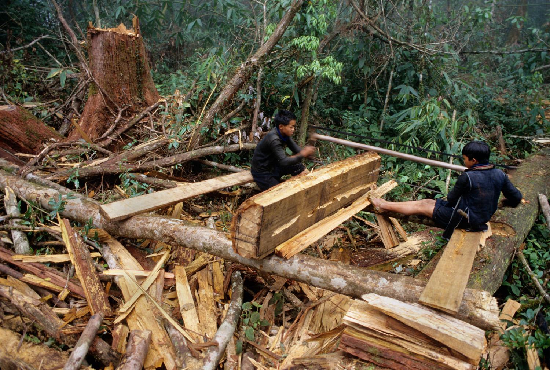 Cutting up sandalwood, Sapa, Vietnam.
