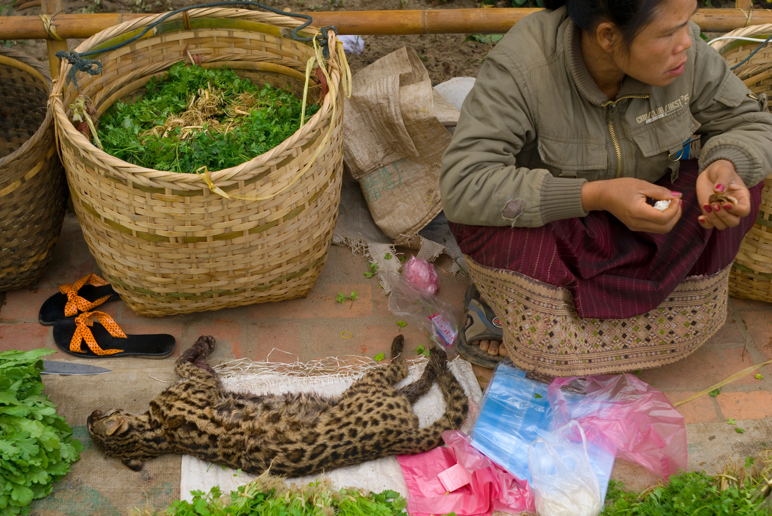 Fresh herbs and a fishing cat for sale at the morning market in Luang Prabang, Laos.