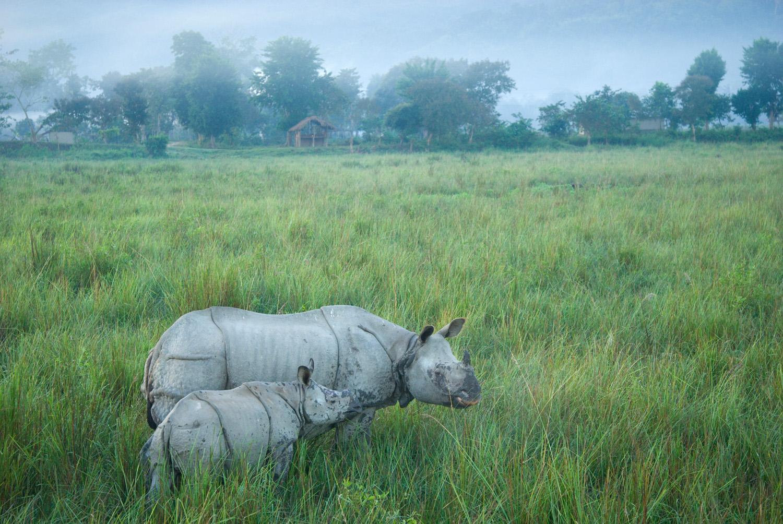 On the edge of Kaziranga National Park, Assam State, India.