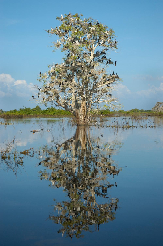 Prek Toal Biosphere Reserve, Cambodia