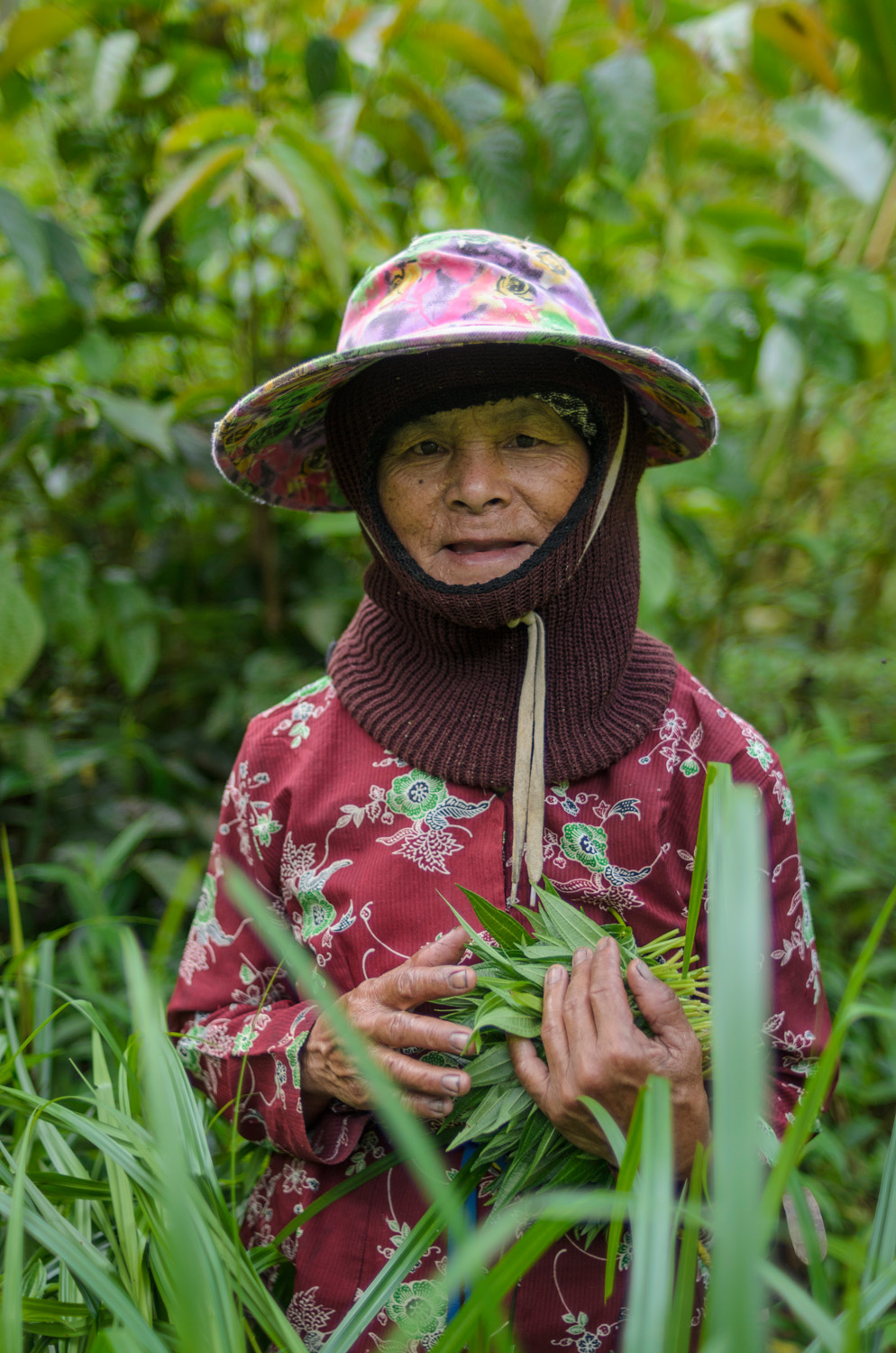 Sina Anid Bala collects wild ferns and herbs in the jungles near Bario. Wild foods gathered from the surrounding jungles make up a large portion of food eaten by people in the Kelabit Highlands.