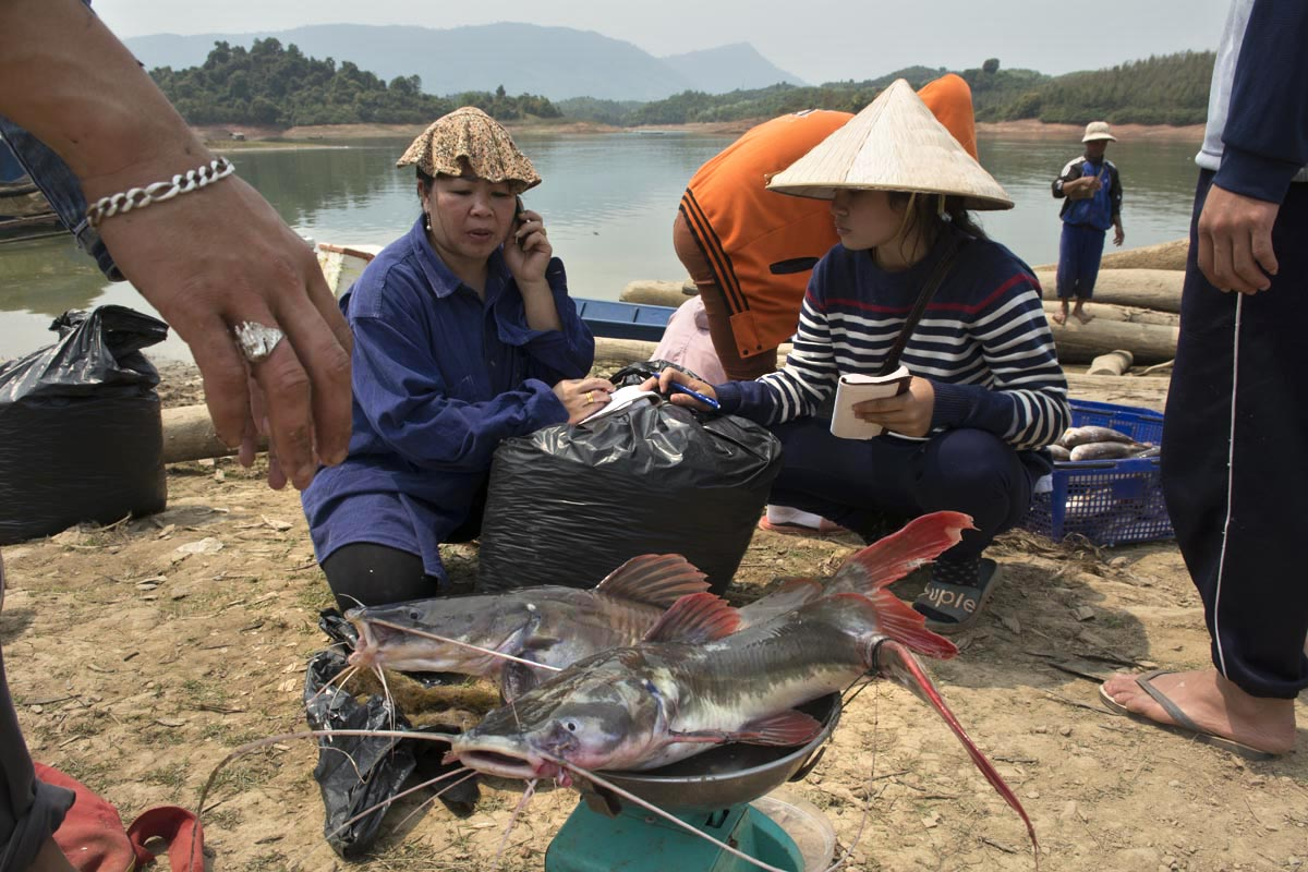 Sellers and buyers haggle over fish from the Nam Ngum Reservoir that will be used to make paa dek, the ubiquitous Laotian national fermented fish sauce. 