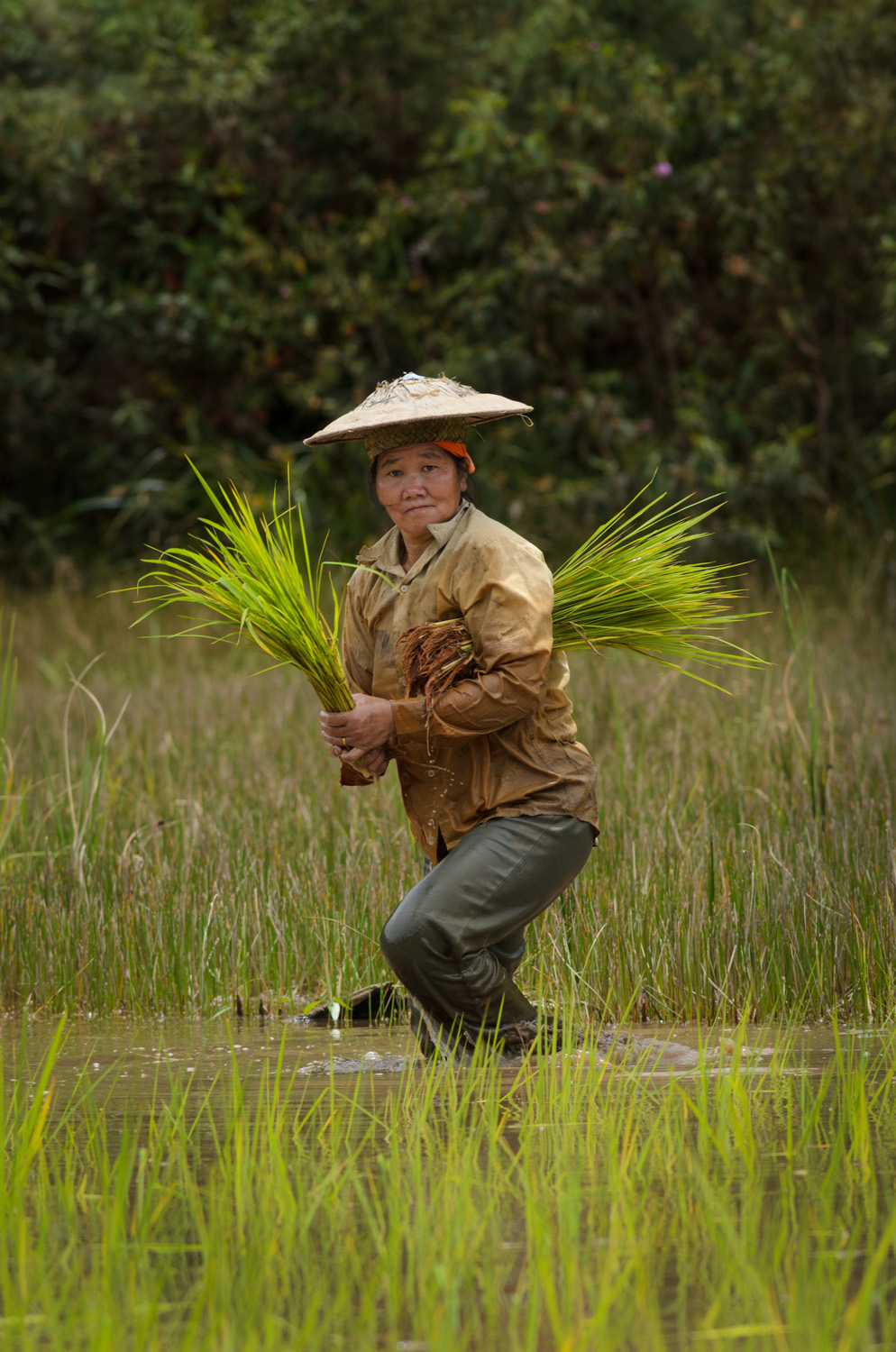 A woman plants rice in a field abutting the jungle in Pa Budah, Sarawak, Malaysia. An archaeological pollen core sample taken near this site shows rice cultivation going back thousands of years.