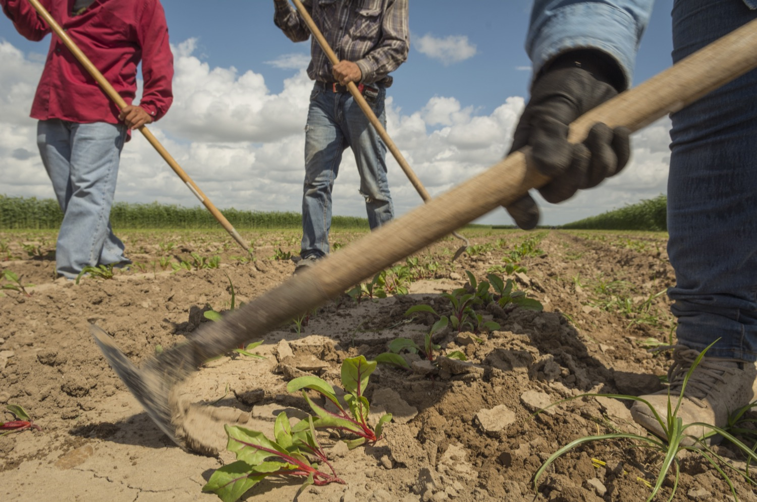 Maria Martinez, right, a field supervisor for Rio Fresh, weeds a field south of Edinburg, Texas. She has worked in the fields of South Texas since she was a kid, picking and hoeing alongside her parents.©2018/Jerry Redfern