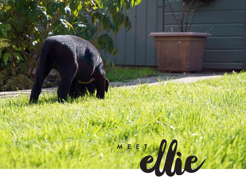 meet-ellie