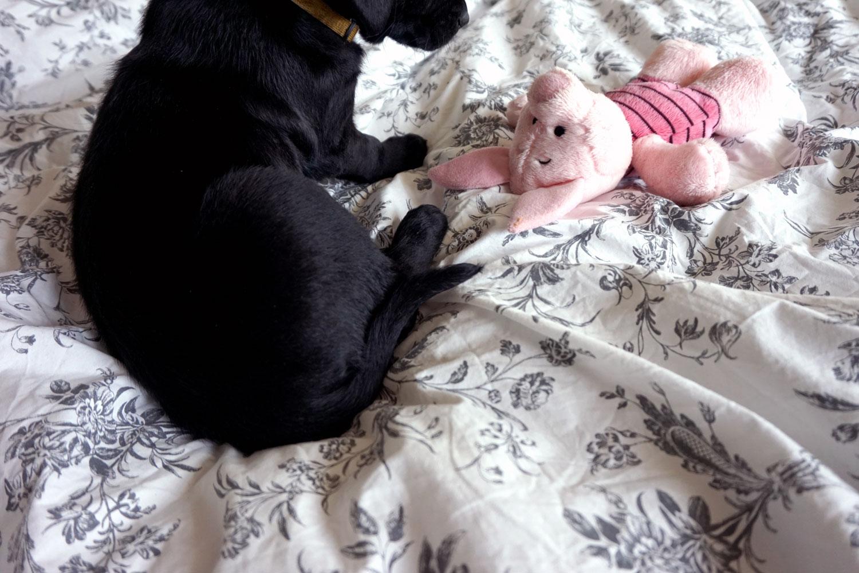 Ellie at 6 weeks old