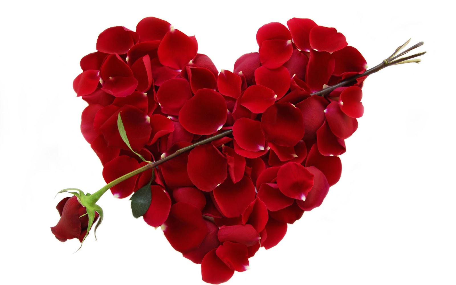 Valentines day roses