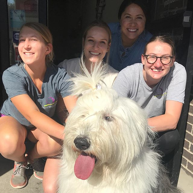 Look who came to visit #berriegoodco for a treat! 🐑🐶@rosie.the.sheepdog
