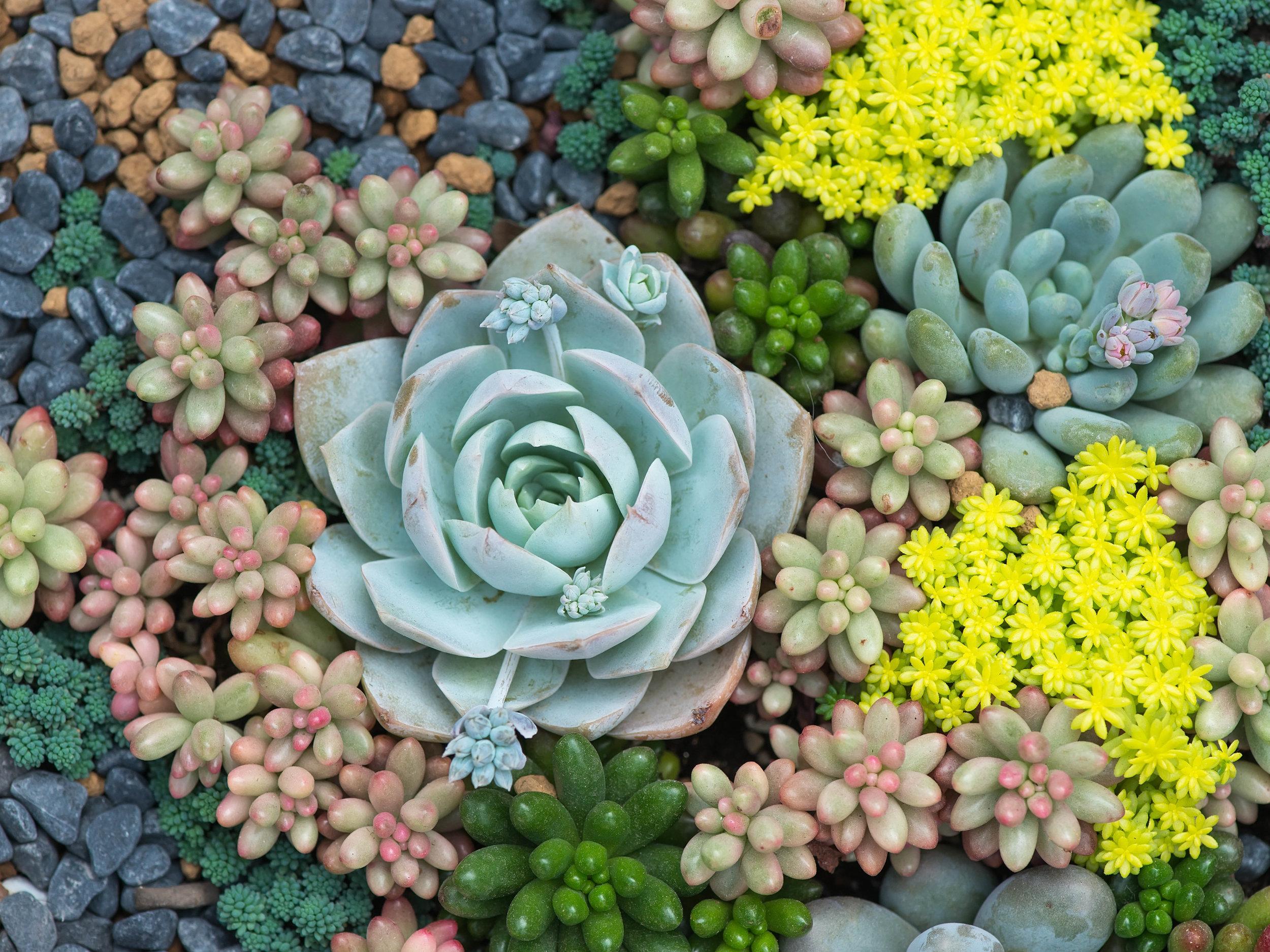 Indoor Succulent Garden Workshop Cactus Tropicals