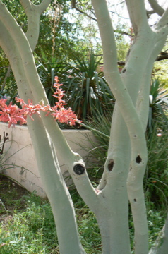 Nature as resource for stress reduction - Palo verde