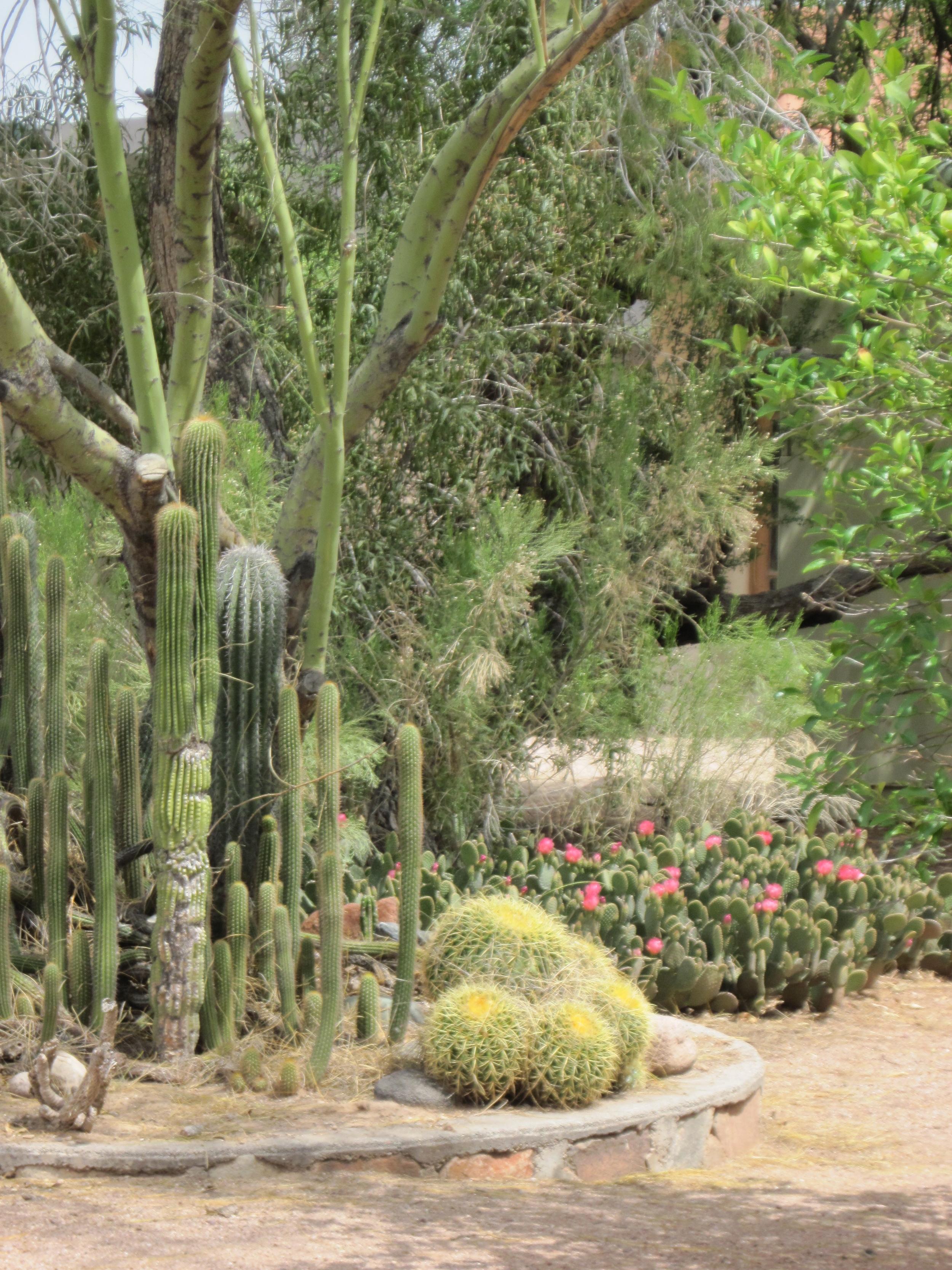 Rolfing® studio garden