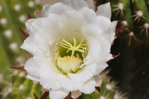 Rolfing® resources images - opened blossom