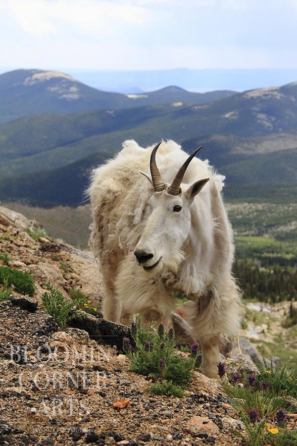 Rocky Mountain High 150 DPI .jpg