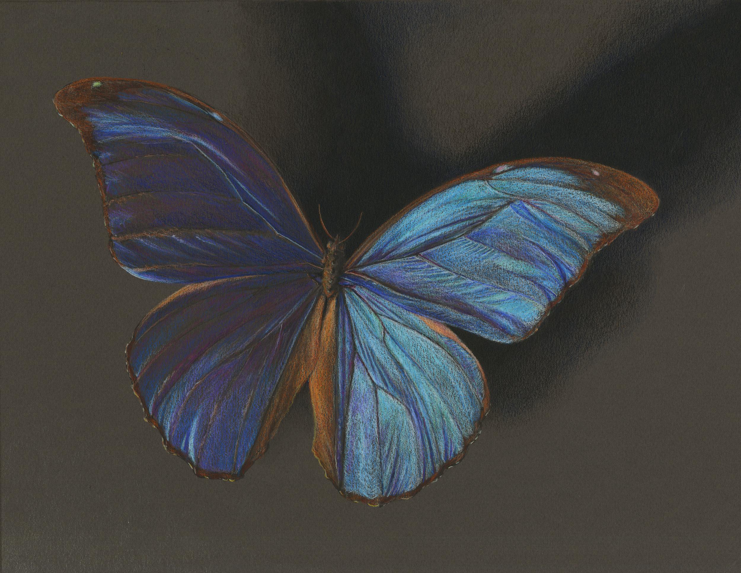 biomed butterfly c.jpg
