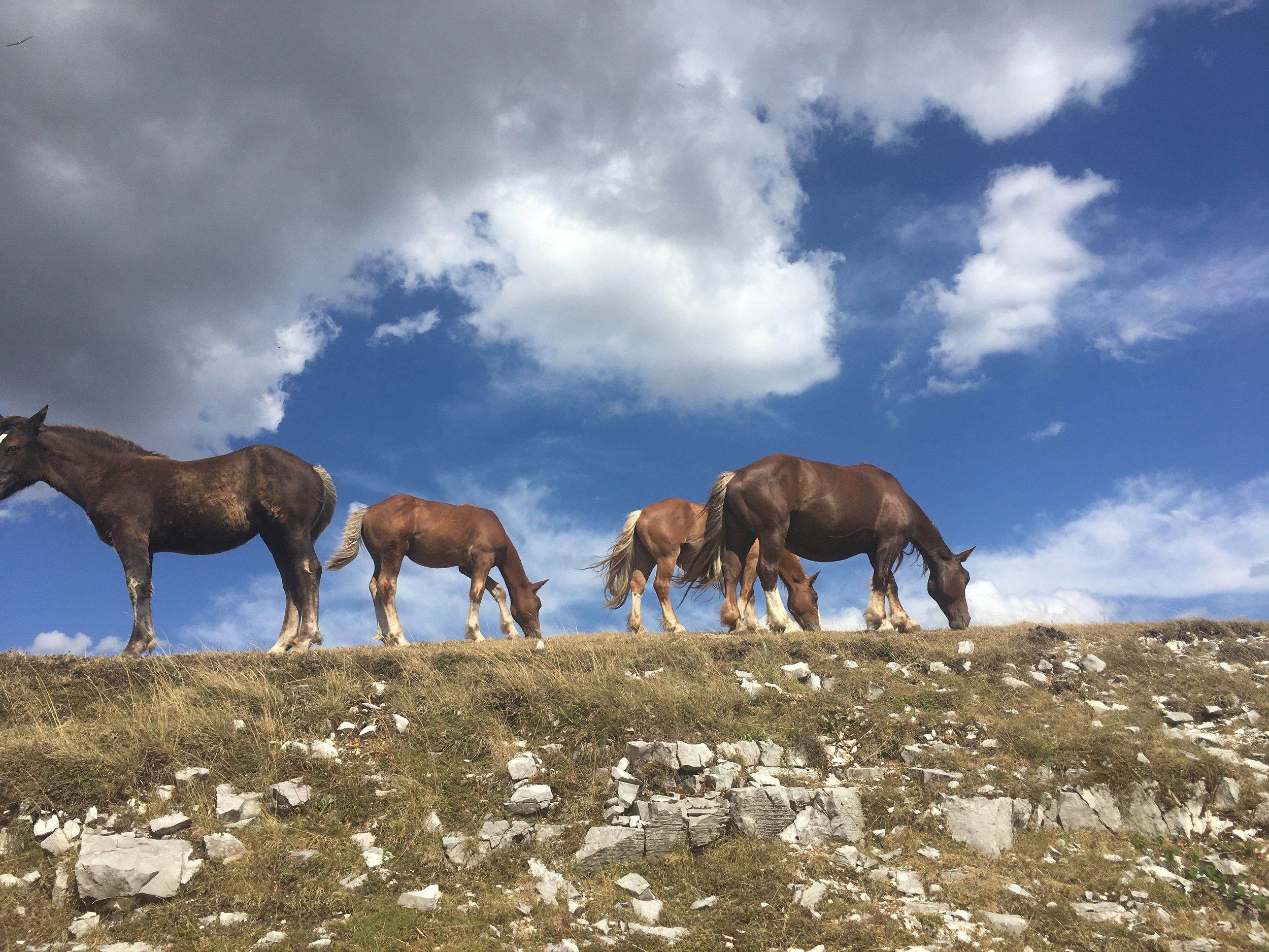 wild horses at Monte Cucco