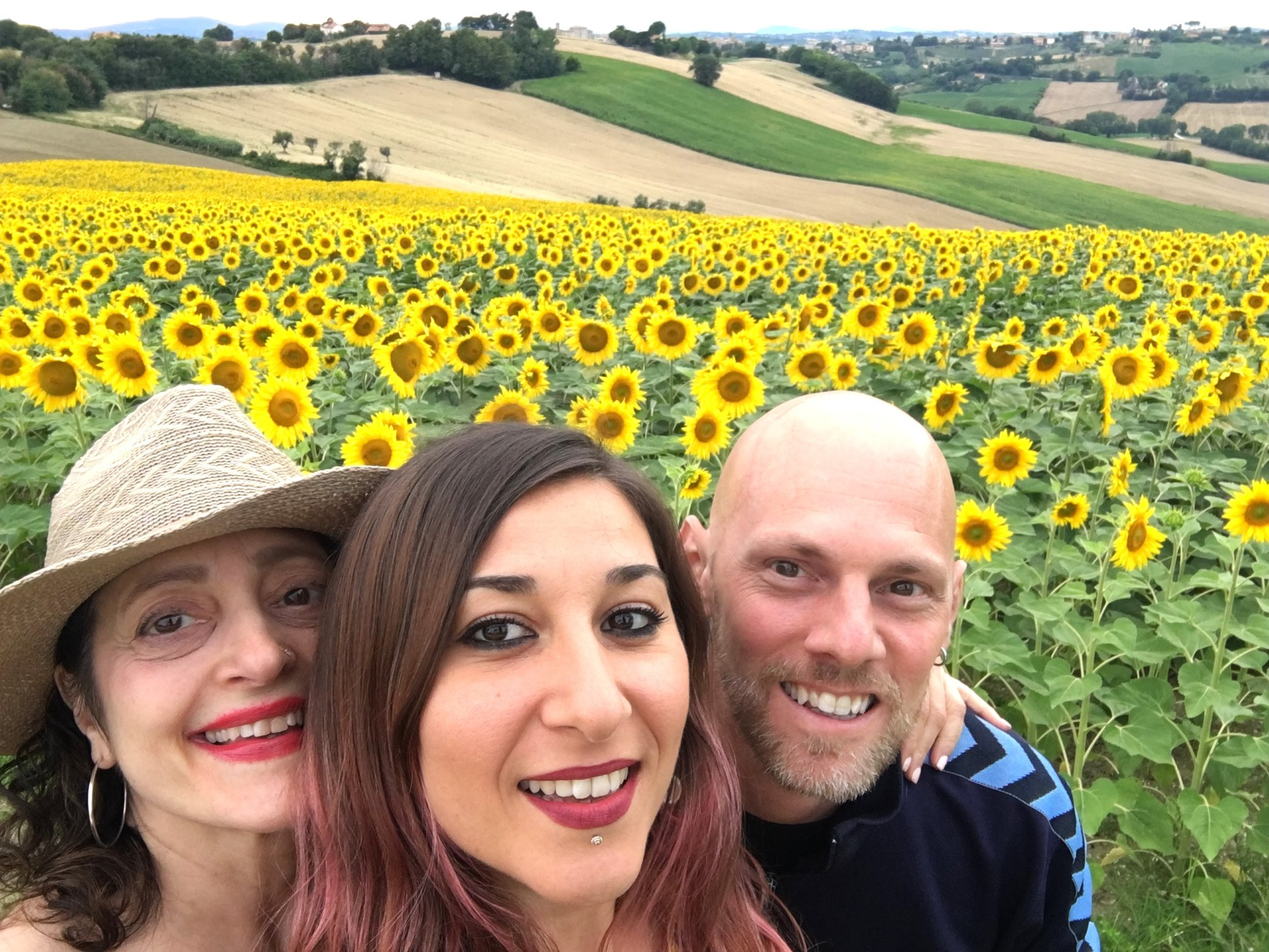 Sunflower fields, Marche