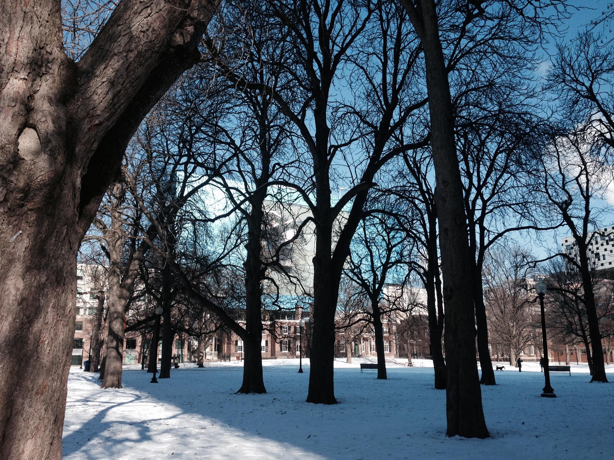 AGOpark1.jpg