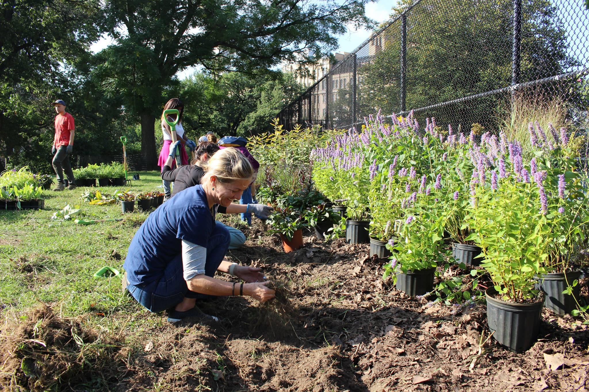 gardener volunteer.jpg