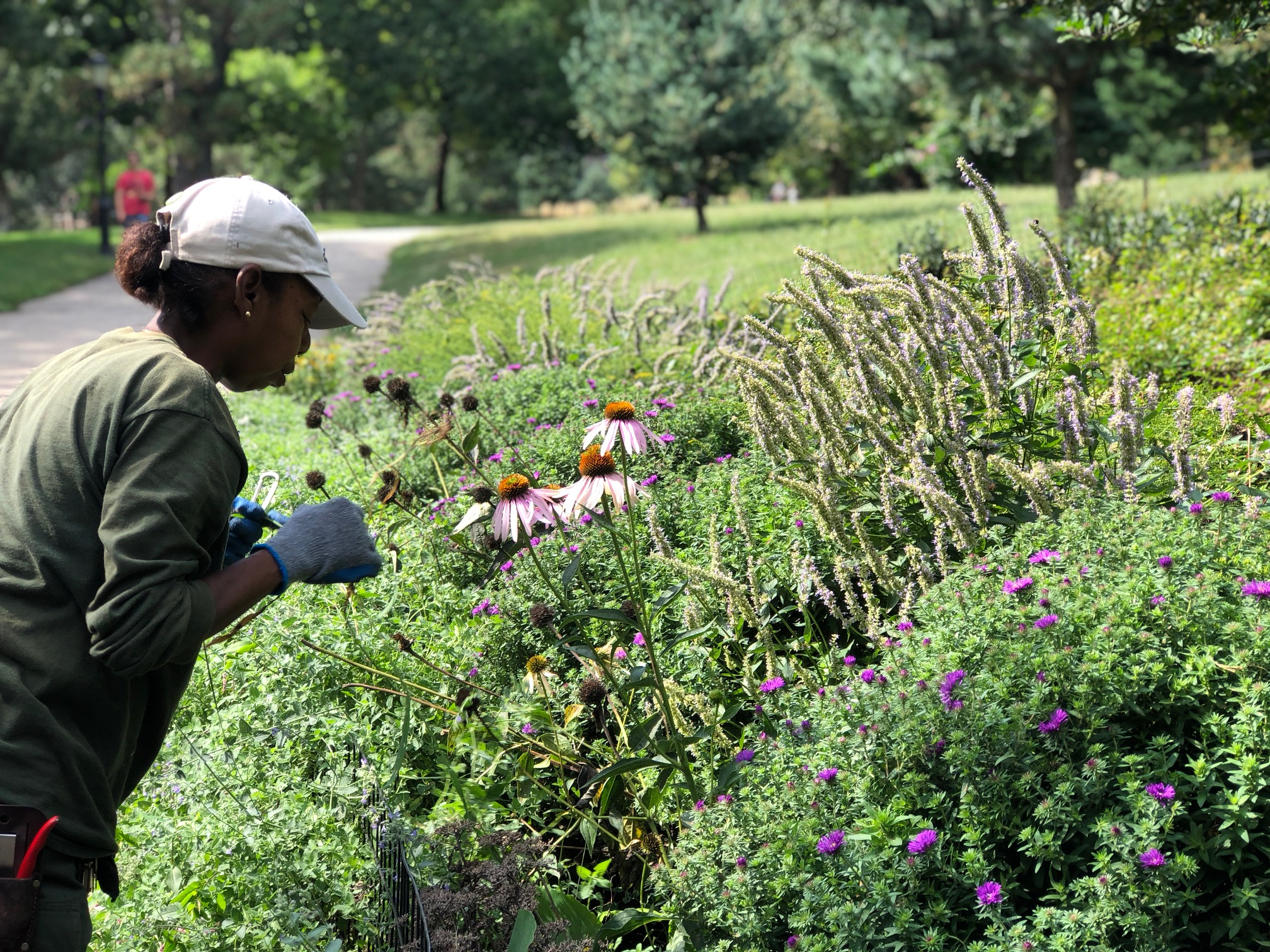 Gardener Maxine Web stopped to smell the coneflowers at the South Portland entrance garden, winner of the NYC Parks August Garden of the Month award.