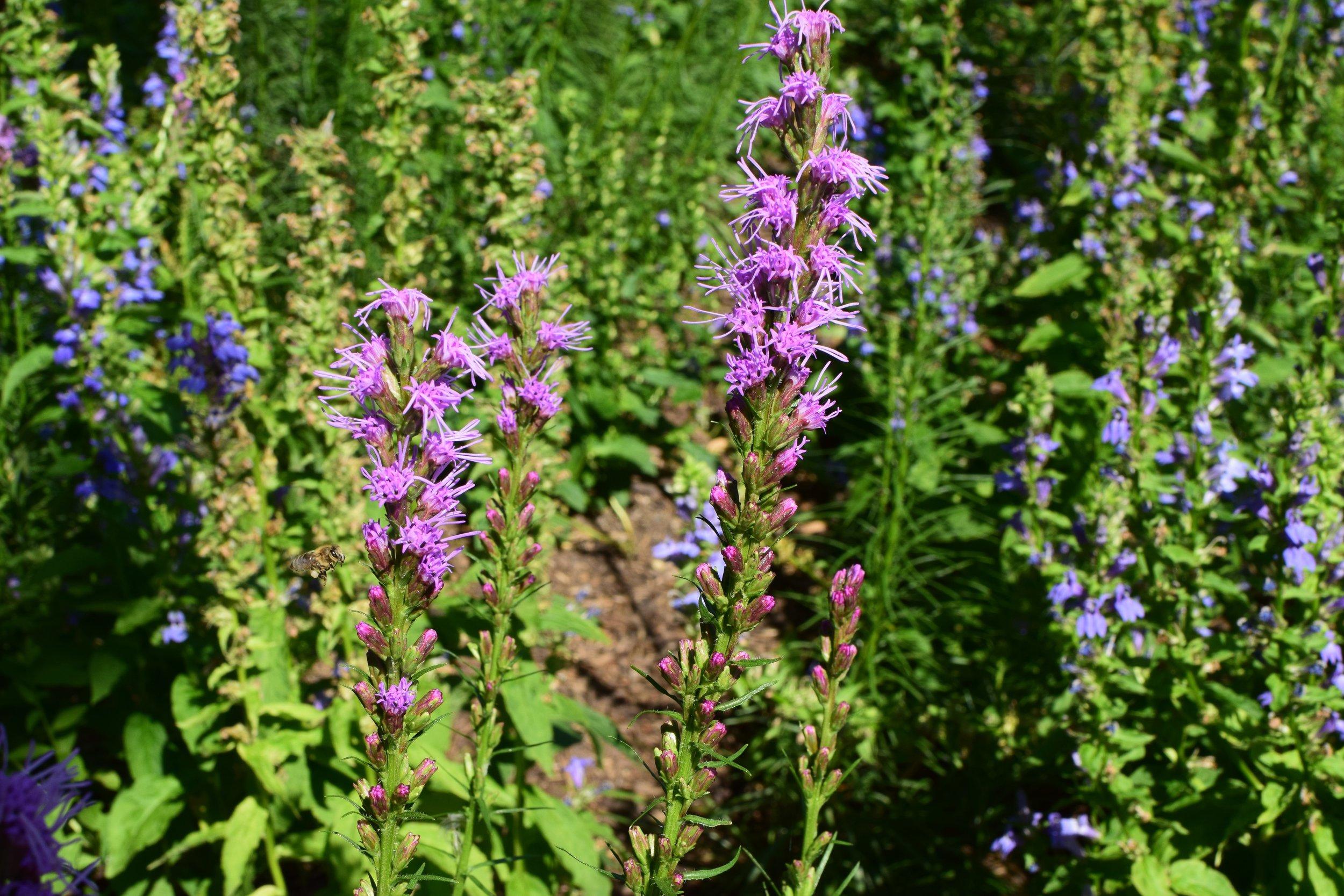FGP Pollinator Garden