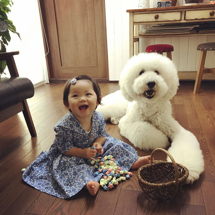 2girl-poodle-dog-friendship-mame-riku-japan-30-59819ea98c19c__700.jpg