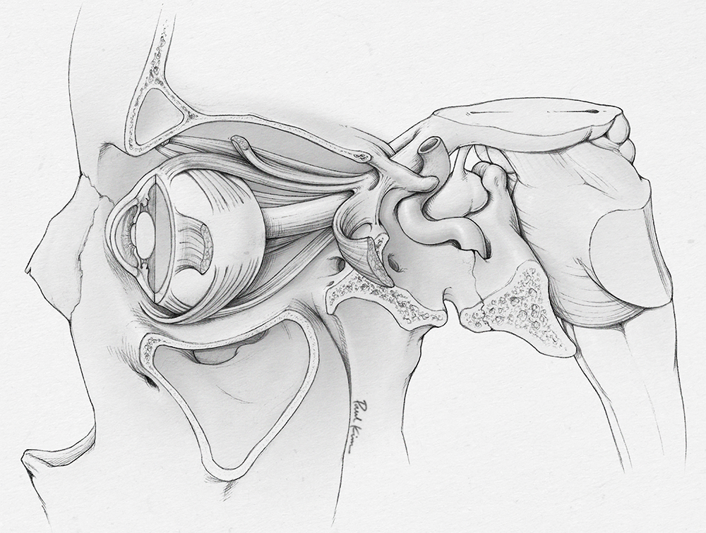 Base Sketch for Cranial Nerve Illustration