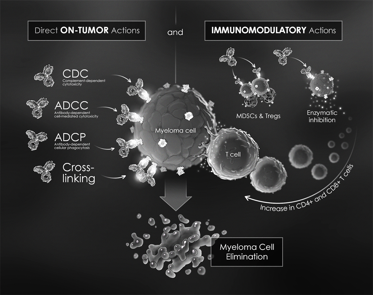 Dual Action of CD38-Directed mAbs Against Multiple Myeloma Cells