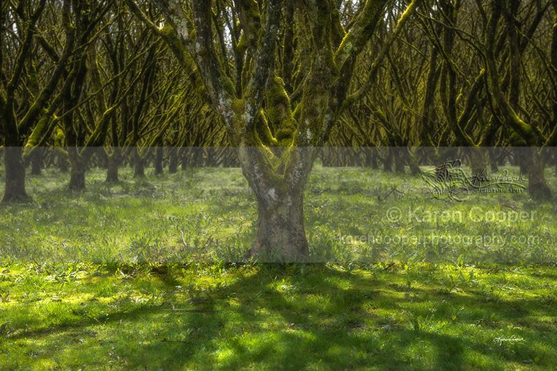 """""""Hazelnut Orchard #1"""""""