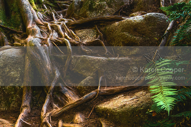 """""""Roots and Ferns"""""""