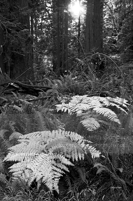 Ghost Ferns