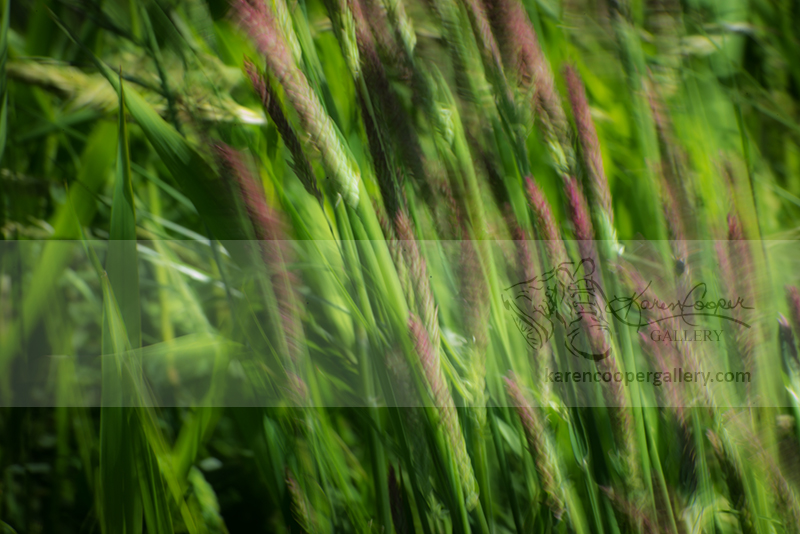 """""""Grasses in Abstract"""""""