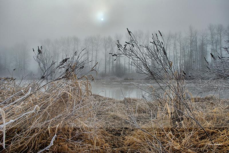 """DeBoville in Frost"""