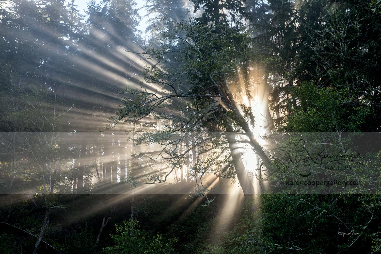 """""""Spirit in the Light"""""""