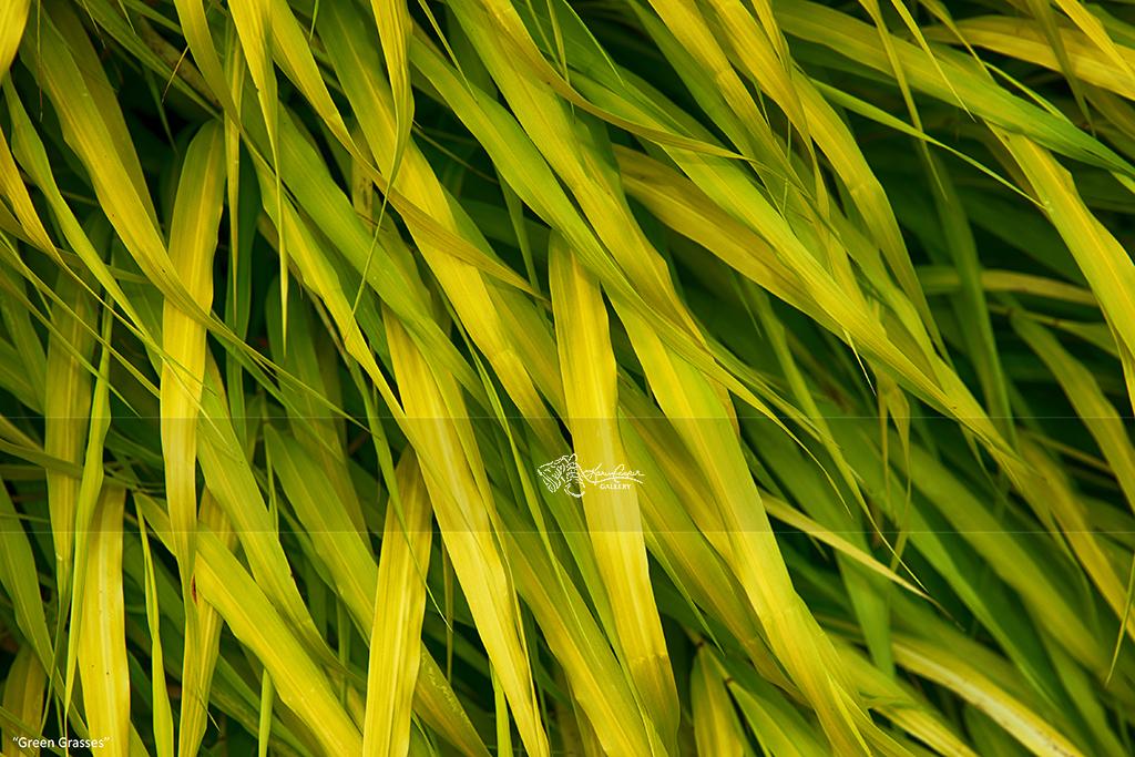 """Green Grasses"""