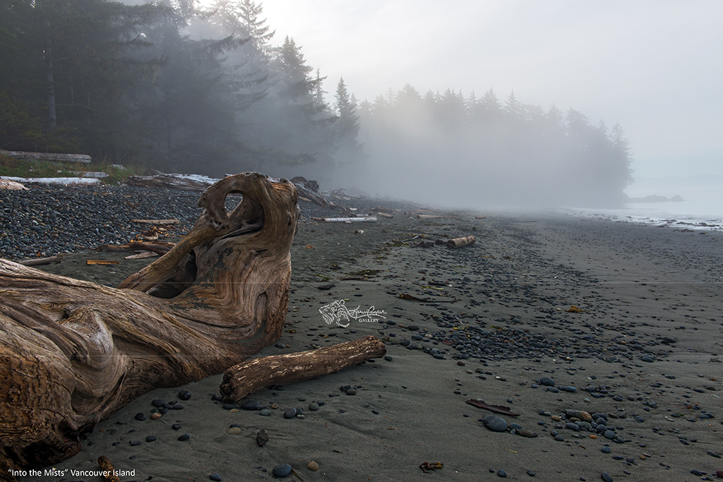 """""""Into the Mists - Vancouver Island"""""""