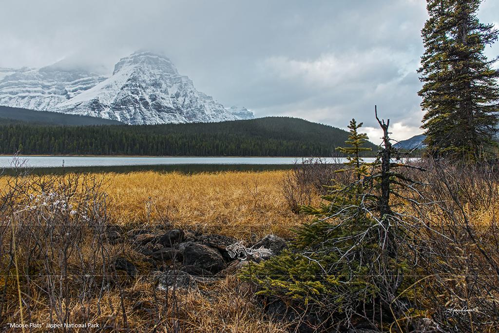 """Moose Flats"" Jasper National Park"
