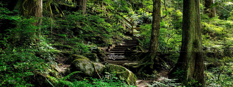 Lynn Valley Stairway