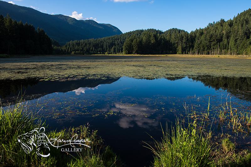 © Karen Cooper - Minnekhada Regional Park.jpg