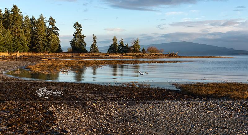 The beach at Rathtrevor Park, Vancouver Island