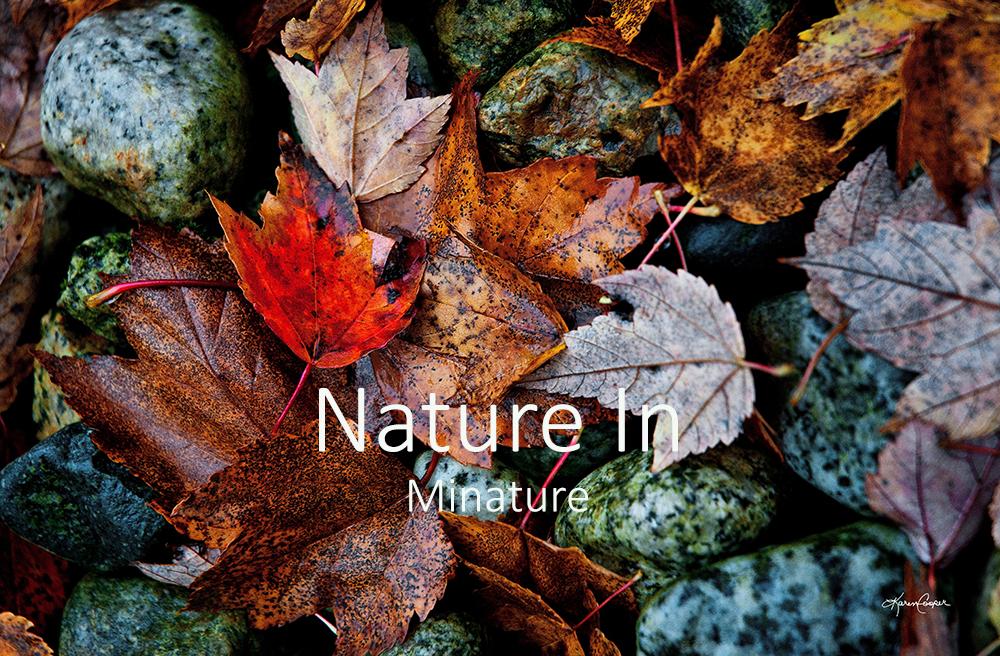 Nature In Minature.jpg