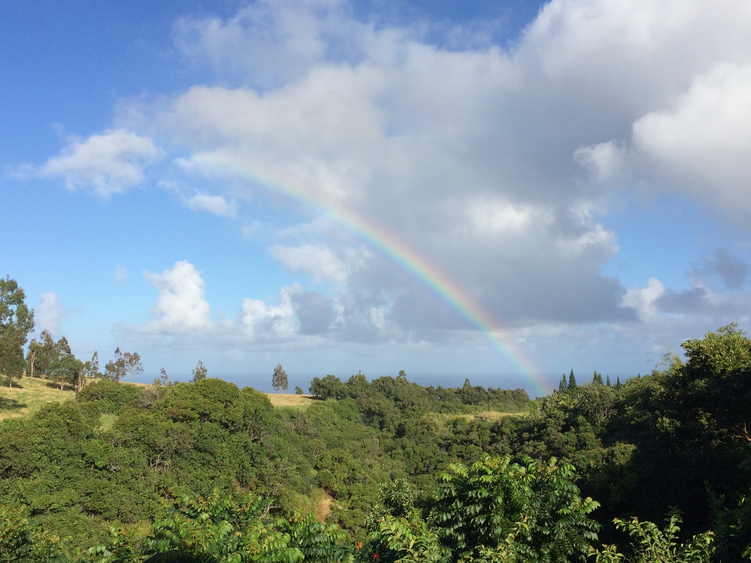 view from the house. oh yes, and the rainforest calls for frequent rainbows.