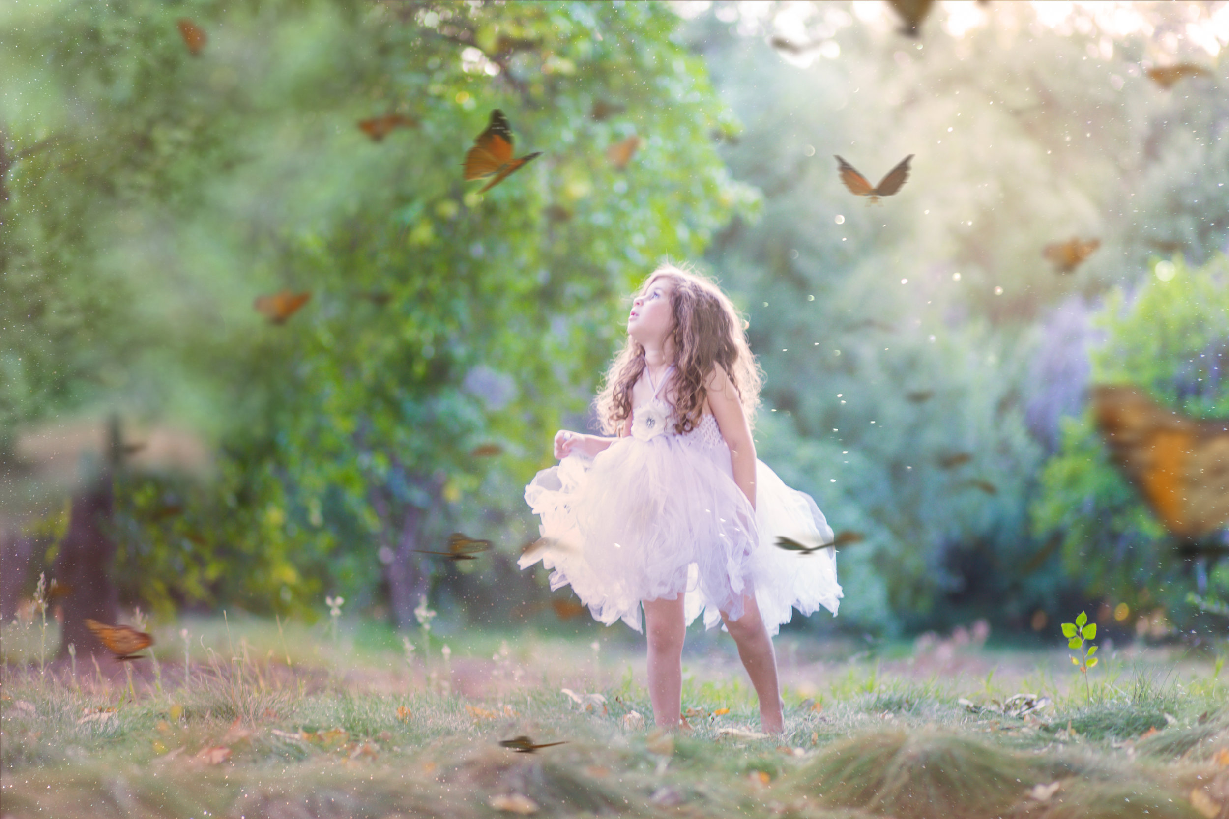 Butterfly Mini-187a.jpg